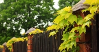 Inkijk in de tuin verminderen