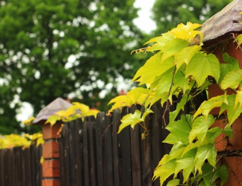 De Inkijk In Je Tuin Verminderen: 8 Oplossingen Voor Meer Privacy