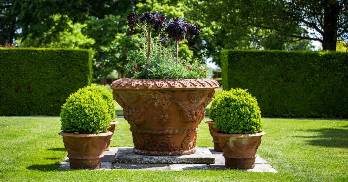 Buxus rondom grote pot