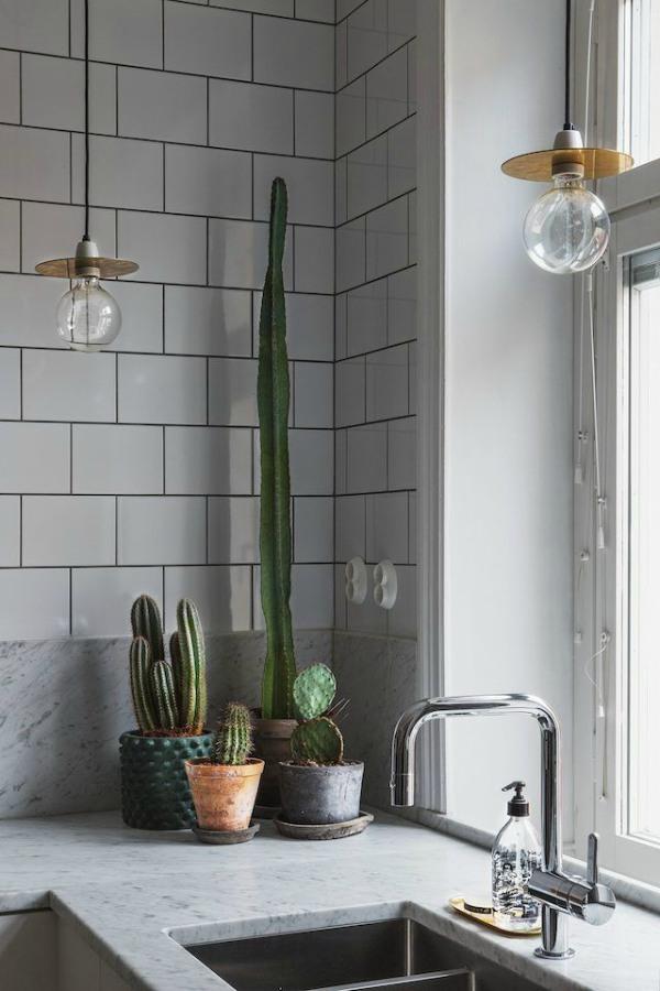 Cactussen in de keuken
