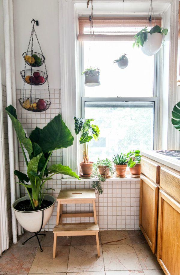 Grote plant in keuken