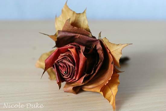 Roos van herfstbladeren