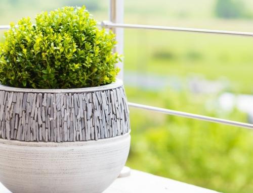 Buxus In Pot Planten Doe Je In 5 Simpele Stappen (+ Je Meest Prangende Buxus-vragen Beantwoord)