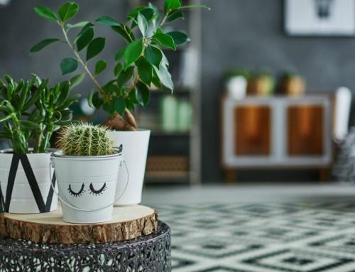 De moderne kamerplant: 13 moderne planten