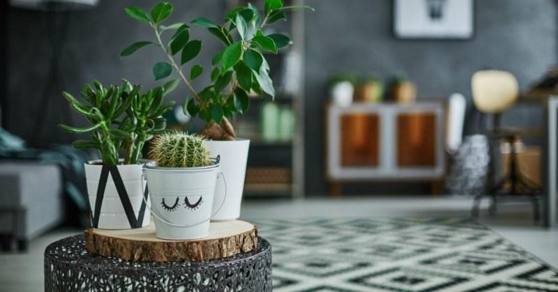 Decoratie Planten Binnen.De Moderne Kamerplant 13 Moderne Planten Buitenlevengevoel Nl