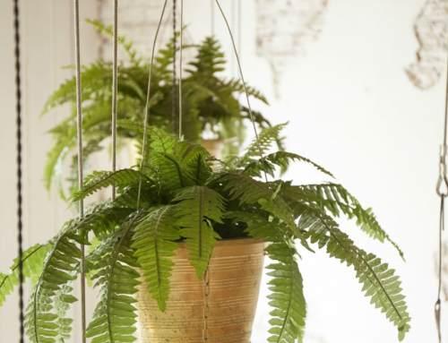 Hangplanten voor binnen: 13 hangplanten ter inspiratie