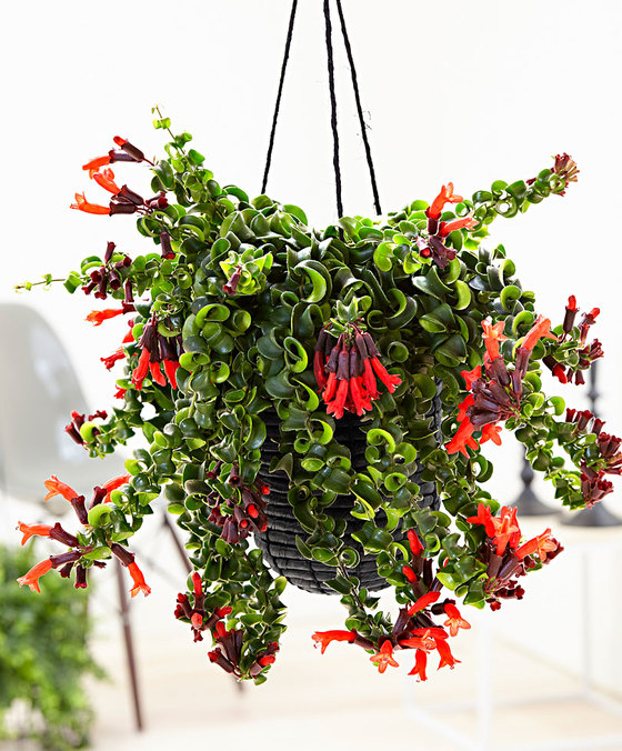 hangplanten voor binnen 14x eens wat anders dan de plant in pot. Black Bedroom Furniture Sets. Home Design Ideas