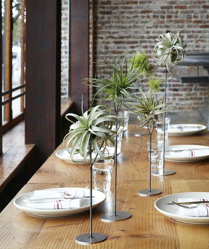 Luchtplanten op tafel