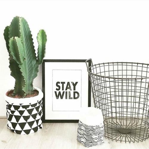 Cactus bij schilderij