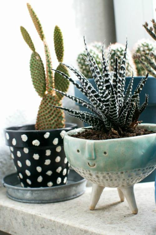 Cactus in grappige vaas