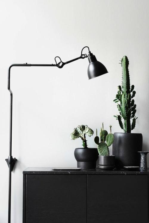 Cactus in matzwarte pot
