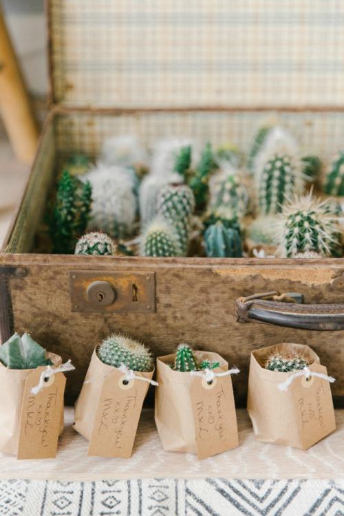 Cactus in papieren zak