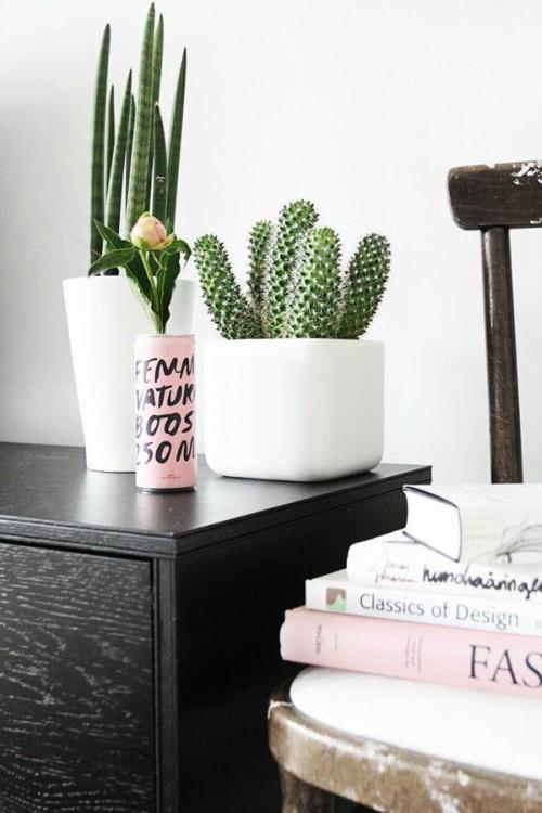 Cactus in witte pot