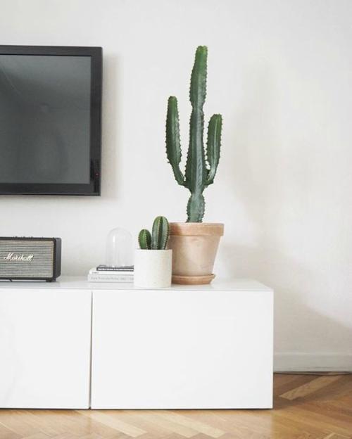 Cactus op tv-meubel