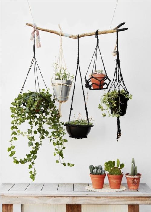 Cactussen en hangplanten