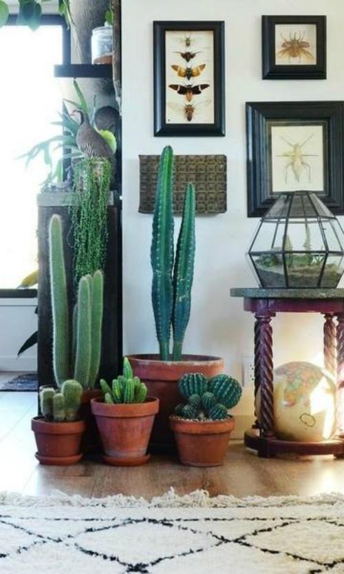 Cactussen in de hal