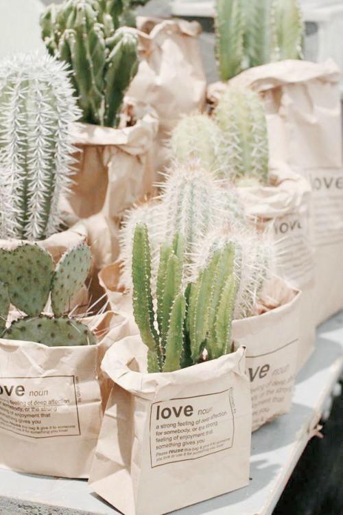 Cactussen in zakjes