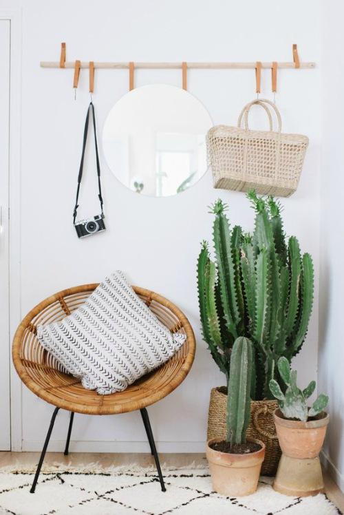 Cactussen onder kapstok