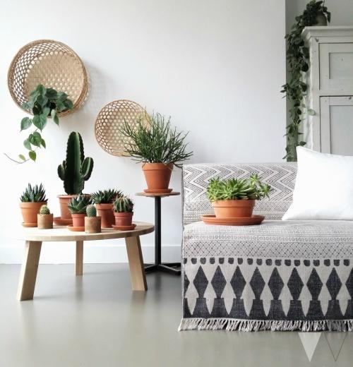 Cactussen op bijzettafel