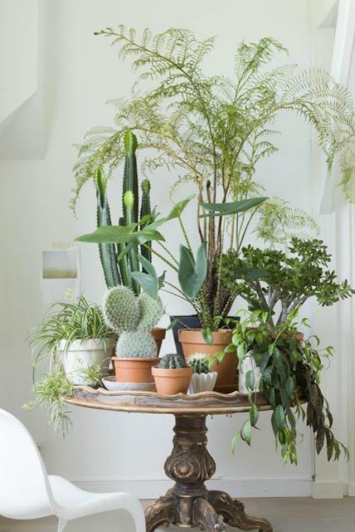 Cactussen op oude tafel