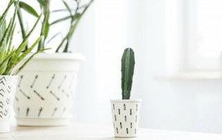 Coverfoto cactus in huis