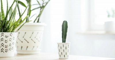 Coverfoto cactus in huis