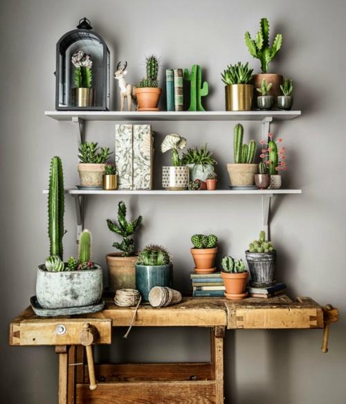 Groene hoek met cactussen