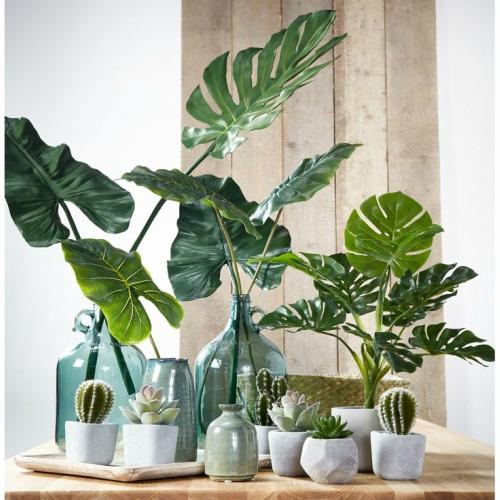 Grote plant met kleine cactussen