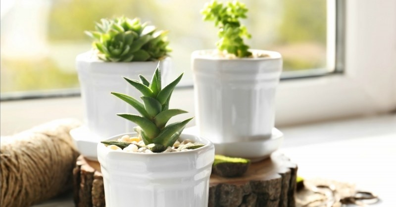 Makkelijke kamerplanten