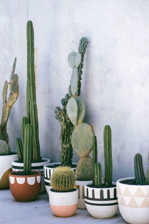 Opvallende potten met cactussen