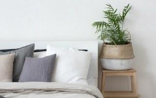 Slaapkamerplanten