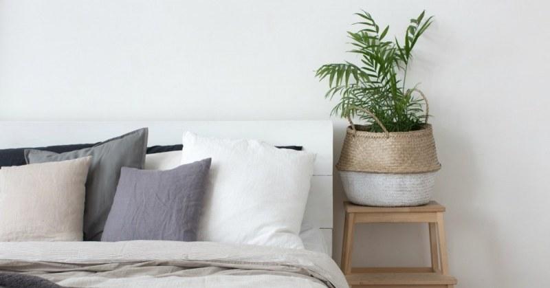 ideale slaapkamerplanten