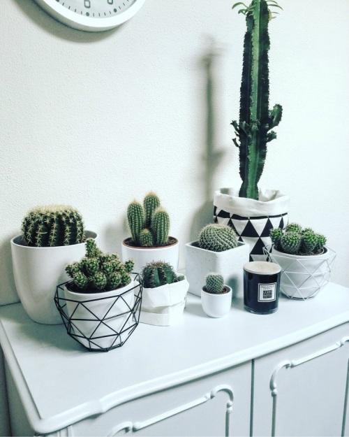 Verzameling van cactussen in huis