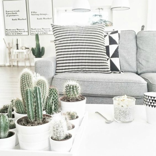 Zwartwit interieur met cactussen
