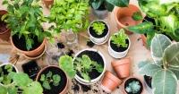 kleine planten