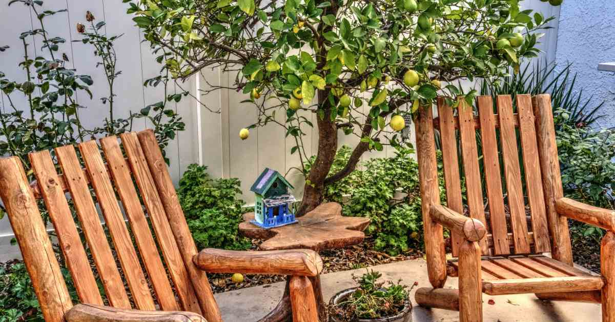 Citroenstruik en houten tuinset
