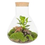 Plant in erlenmeyer
