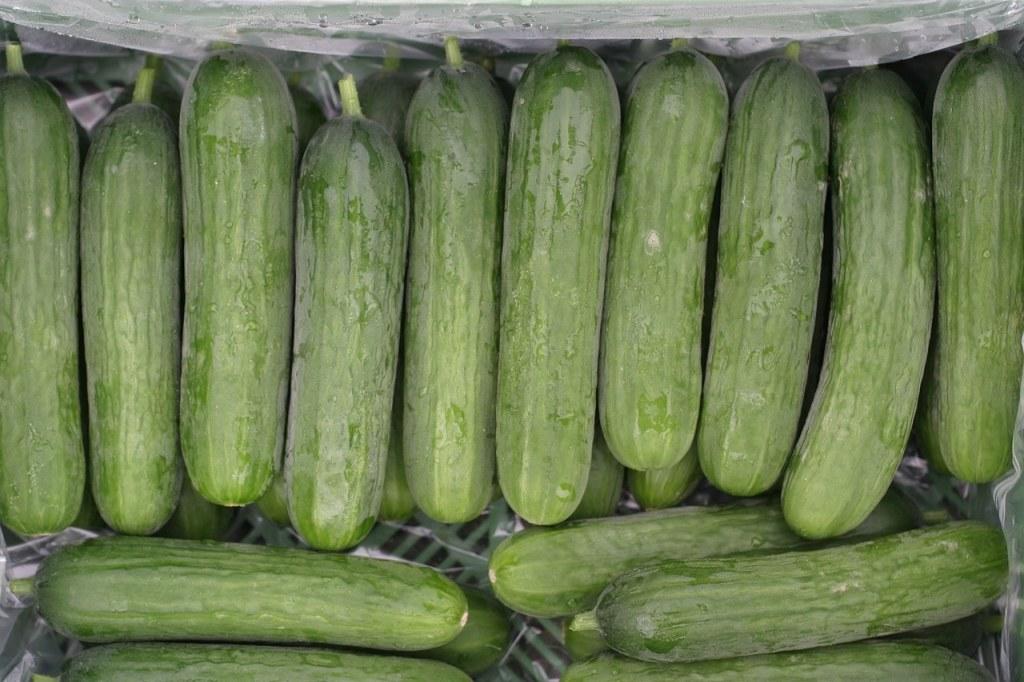 oogst kleine komkommers