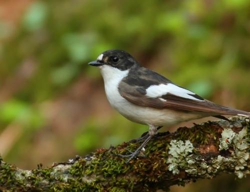 10 tips om meer vogels naar de tuin te lokken
