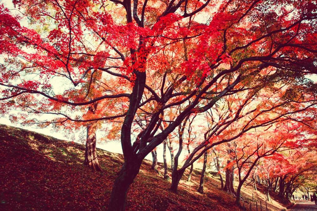 rode mooie bomen