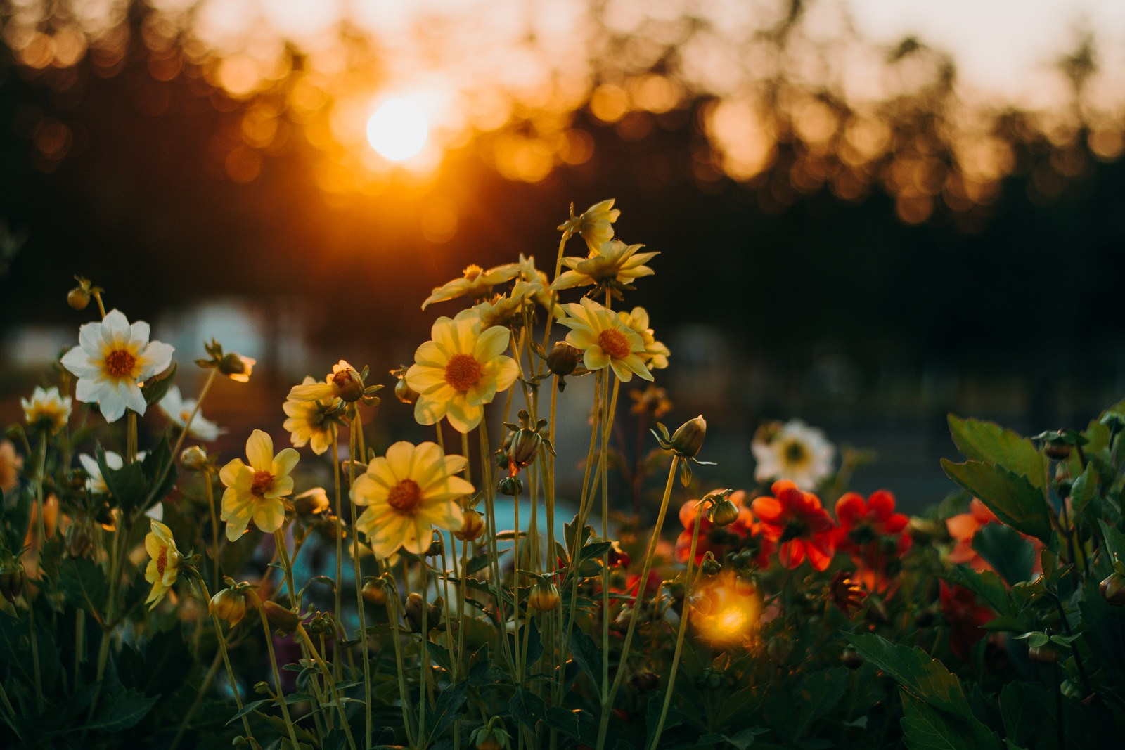 bloemen tijdens golden hour